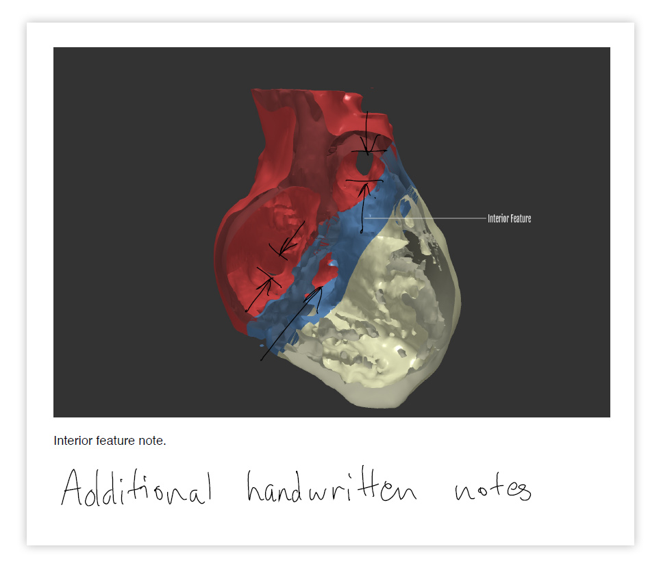 Cardiac Review 3D PDF Notes