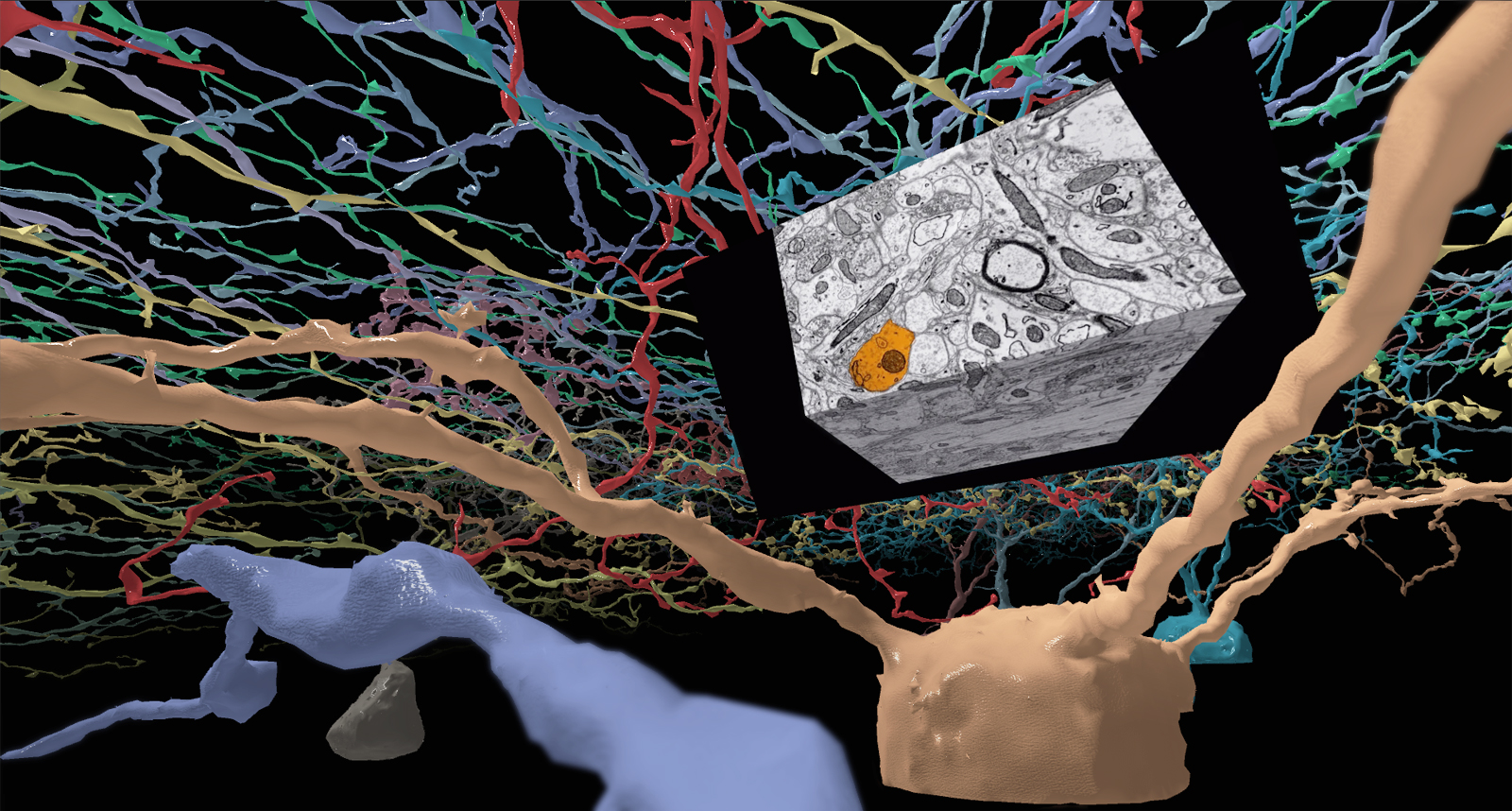 Neuron Safari: Visual Science in Virtual Reality