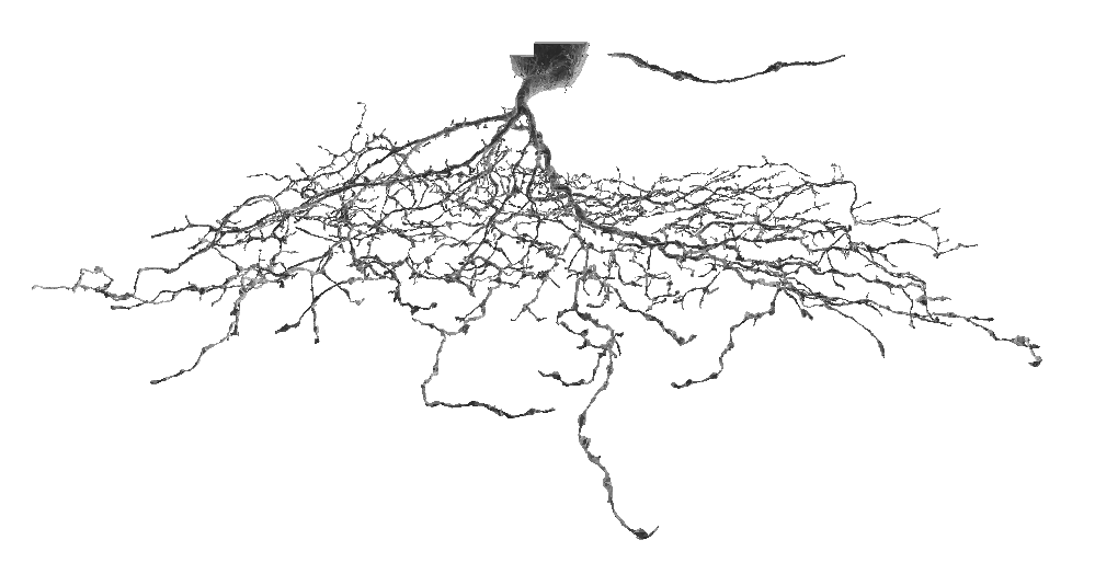 Neuron model converted to a polygonal mesh.