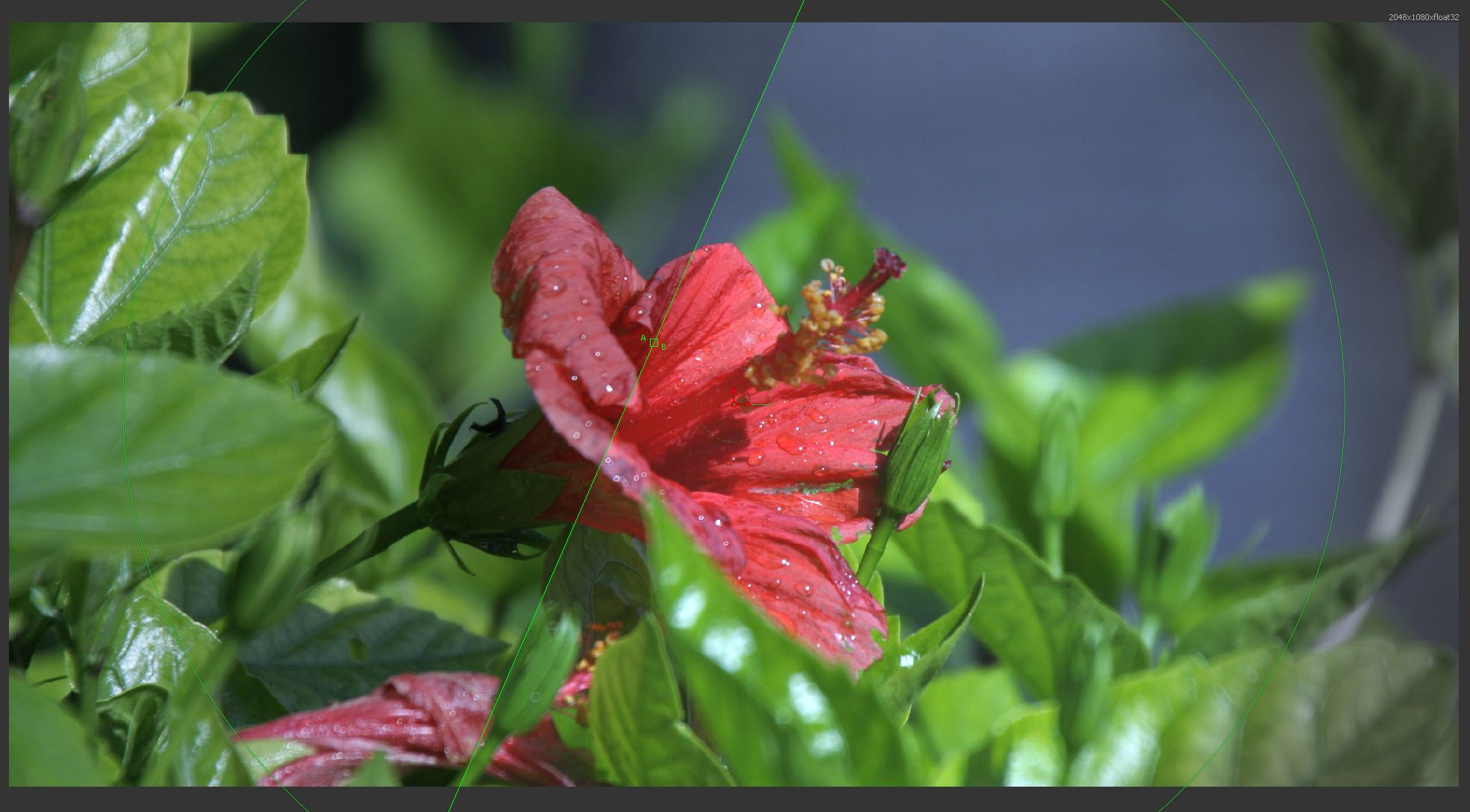 Pixel-perfect float32 GPU color correction demonstrated on a picture of a flower